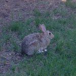 rabbit-small